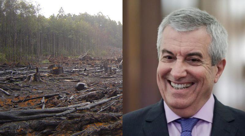 Liber la defrişări. Senatul a adoptat un proiect care permite defrişările în zonele cu păduri virgine