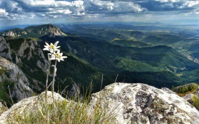 Floarea de colţ, monument al naturii