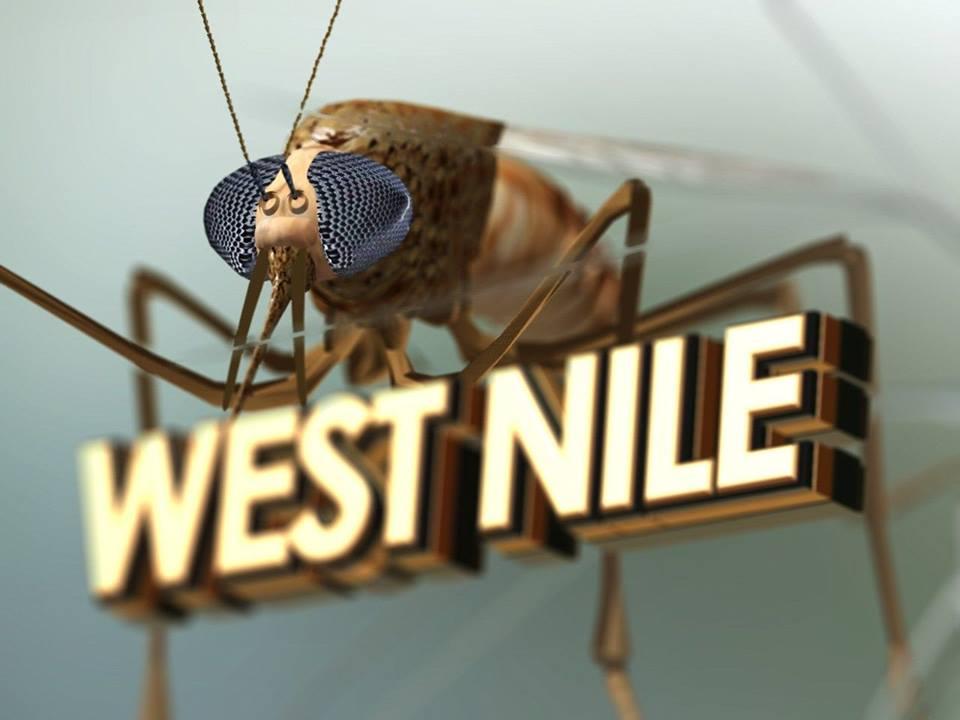 30 de oameni şi-au pierdut viaţa, în acest an, din cauza infecţiilor cu virusul West Nile, în România.