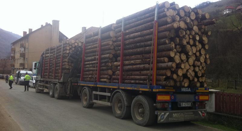 Cum se fură pădurile României. Reţetele de legalizare a lemnului tăiat ilegal