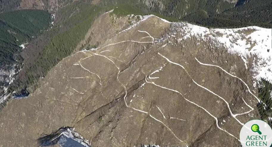 Defrișări Munții Făgăraș