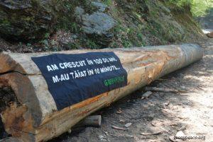 O statistică recentă, dată publicităţii de Greenpeace, citată de o analiză Frames, estima că România pierde în fiecare oră peste 3 hectare de pădure