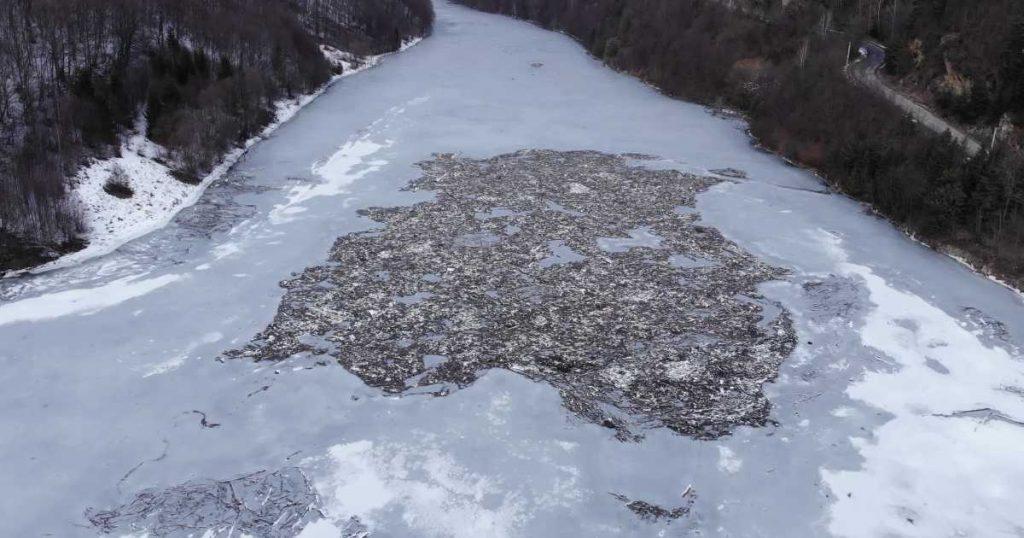 Imaginile ruşinii pe râul Arieş, în Apuseni.