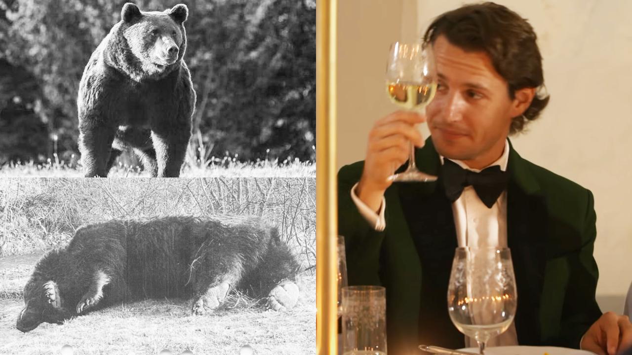 Arthur era cel mai mare urs observat în România şi probabil cel mai mare din Uniunea Europeană, spun cei de la Agent Green. A murit împuşcat de un prinţ de Liechtenstein.